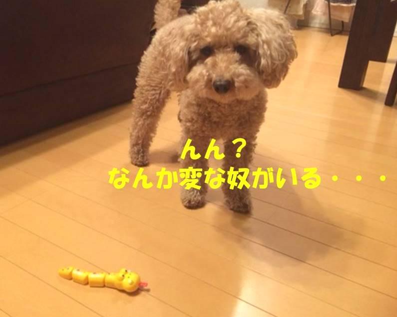 f:id:nanachan59:20180319180820j:plain