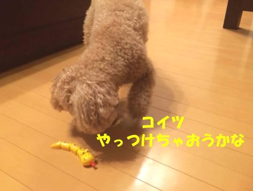 f:id:nanachan59:20180319181344j:plain