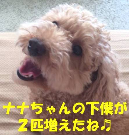f:id:nanachan59:20180319204509j:plain