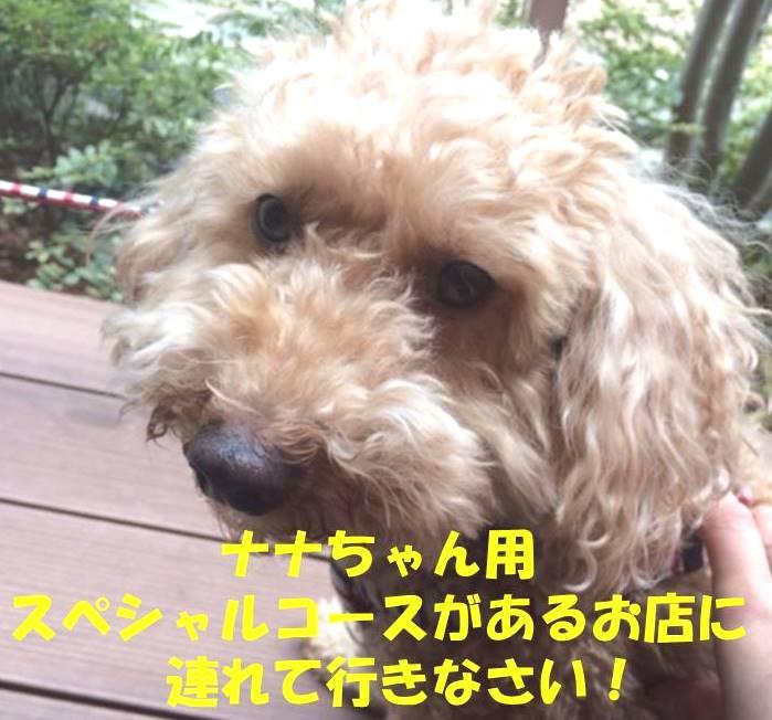 f:id:nanachan59:20180321180253j:plain