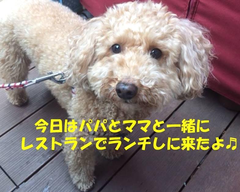 f:id:nanachan59:20180321184743j:plain