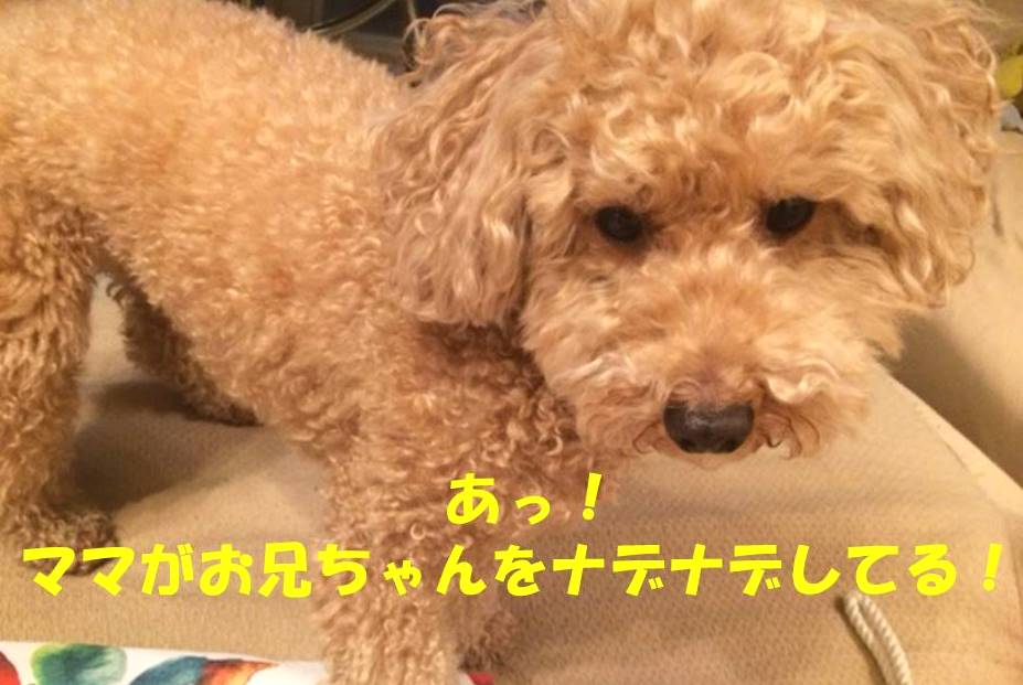 f:id:nanachan59:20180323181647j:plain