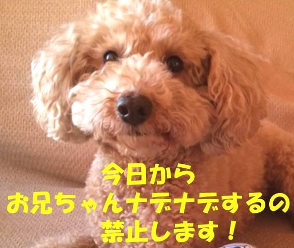 f:id:nanachan59:20180323182201j:plain