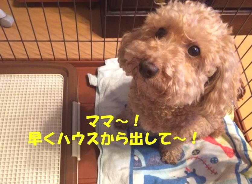f:id:nanachan59:20180325174959j:plain