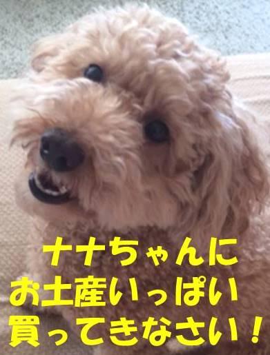 f:id:nanachan59:20180325175918j:plain