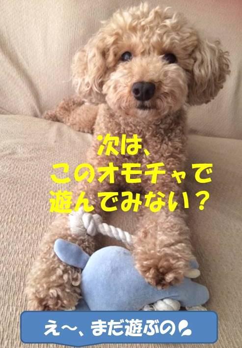 f:id:nanachan59:20180327145629j:plain