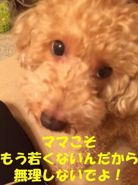 f:id:nanachan59:20180327150318j:plain