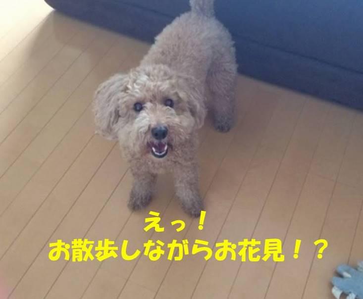 f:id:nanachan59:20180329204842j:plain