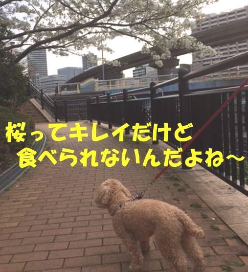f:id:nanachan59:20180329211448j:plain