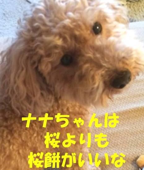 f:id:nanachan59:20180329212129j:plain