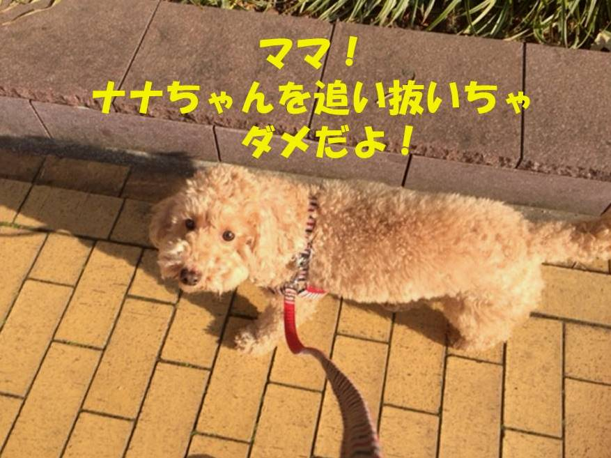 f:id:nanachan59:20180331205018j:plain