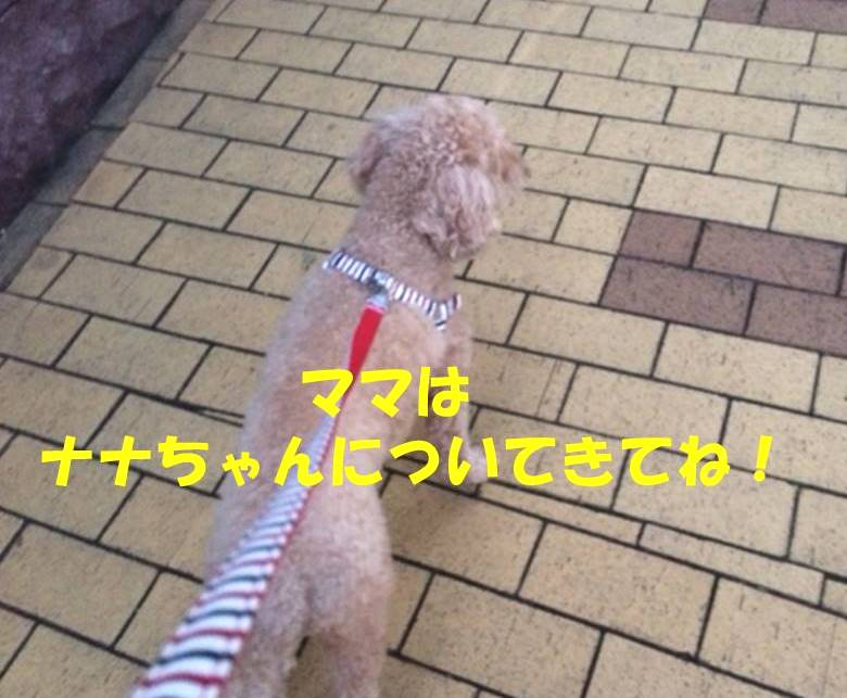 f:id:nanachan59:20180331205702j:plain