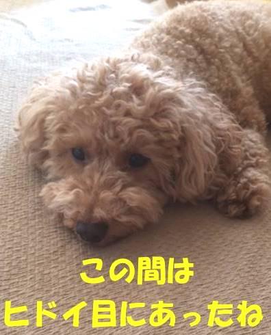 f:id:nanachan59:20180331211507j:plain