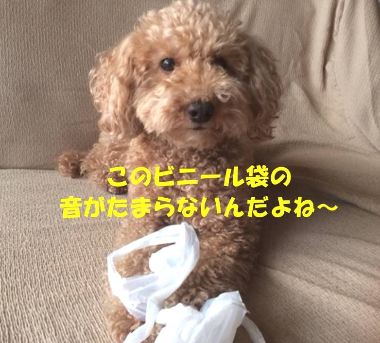 f:id:nanachan59:20180405223551j:plain