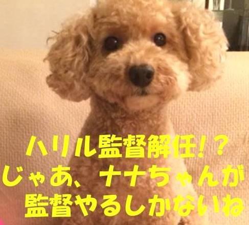 f:id:nanachan59:20180409175959j:plain