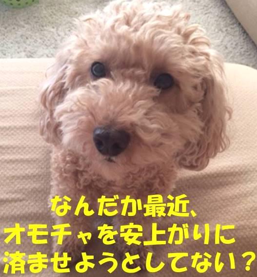 f:id:nanachan59:20180412144506j:plain