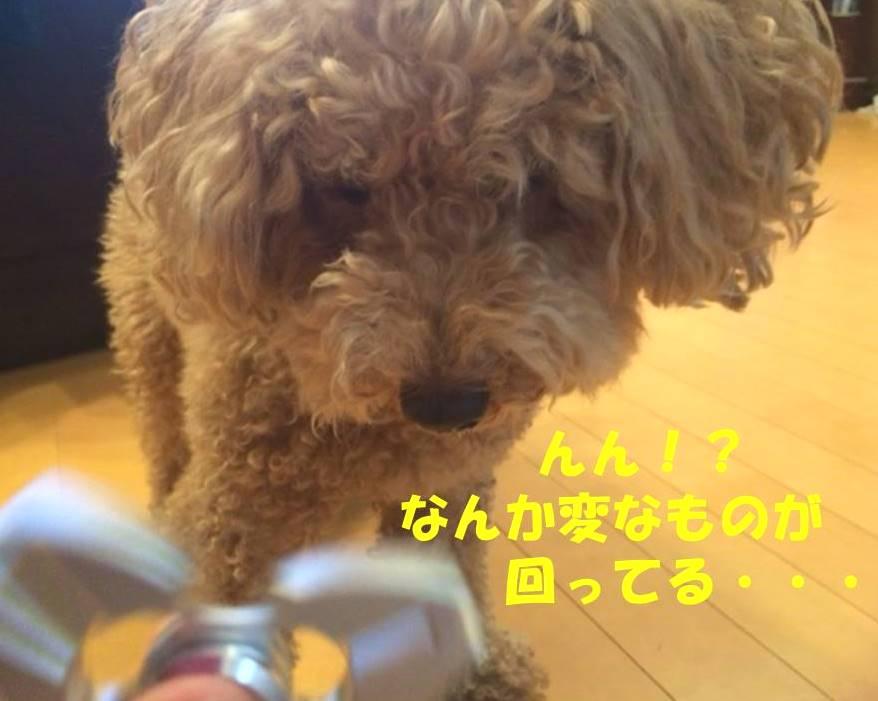 f:id:nanachan59:20180412203741j:plain