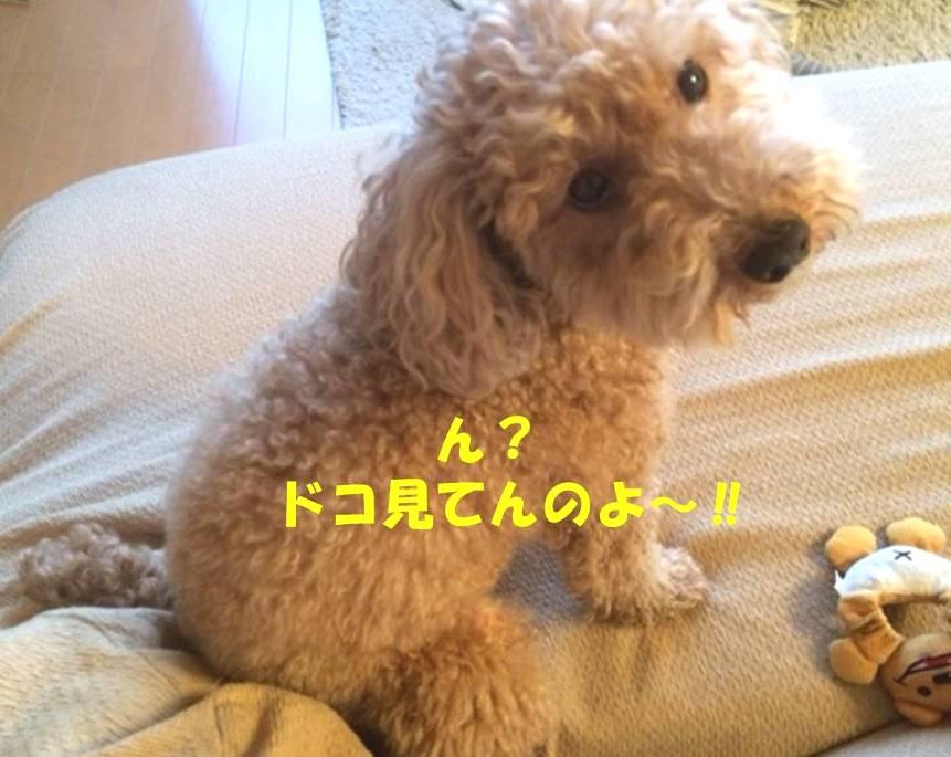 f:id:nanachan59:20180414221511j:plain