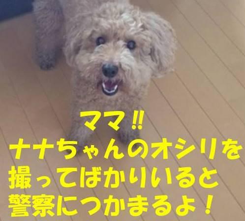 f:id:nanachan59:20180414224701j:plain