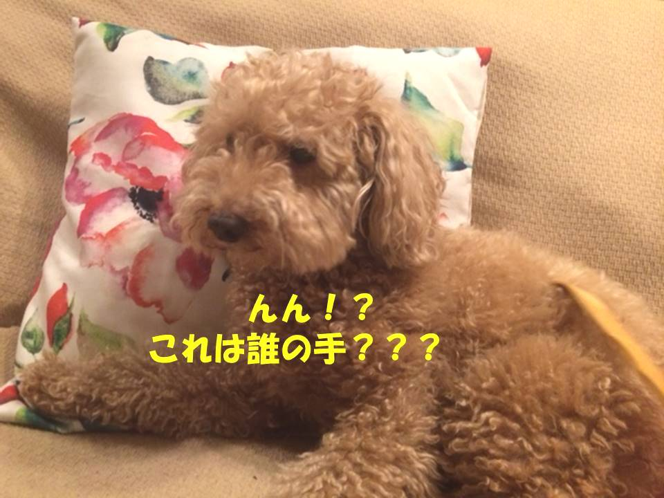 f:id:nanachan59:20180415195244j:plain