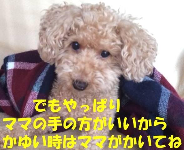 f:id:nanachan59:20180415195635j:plain