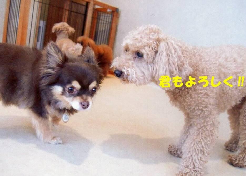 f:id:nanachan59:20180416225314j:plain