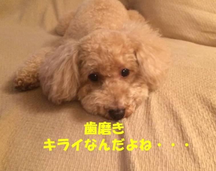 f:id:nanachan59:20180421210216j:plain