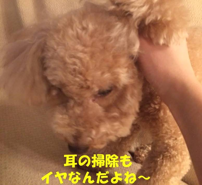 f:id:nanachan59:20180421213831j:plain