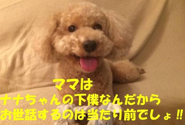 f:id:nanachan59:20180421214938j:plain