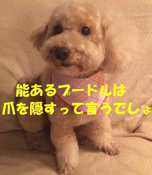 f:id:nanachan59:20180423221431j:plain