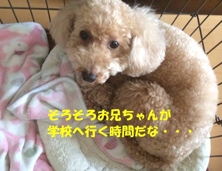 f:id:nanachan59:20180425183328j:plain