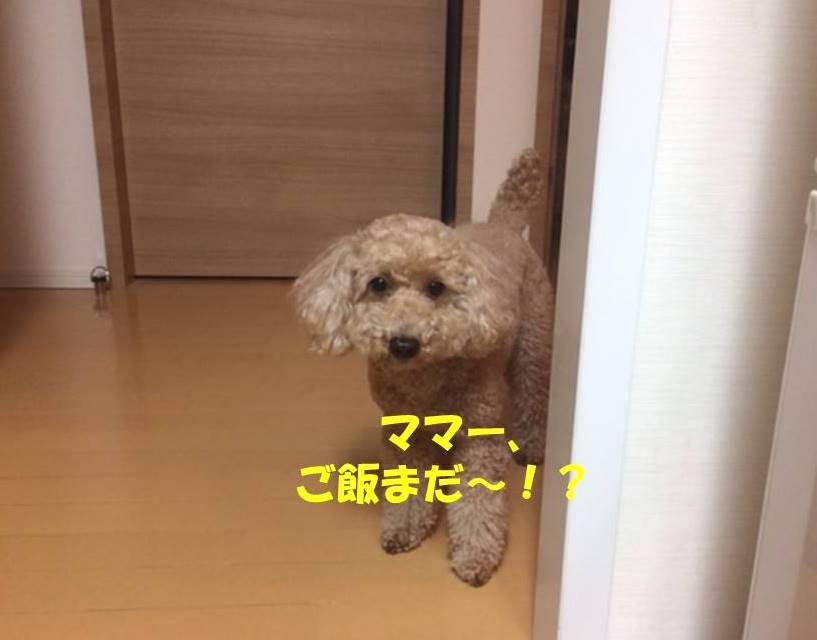 f:id:nanachan59:20180429180913j:plain