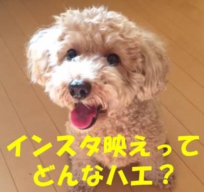 f:id:nanachan59:20180502183703j:plain
