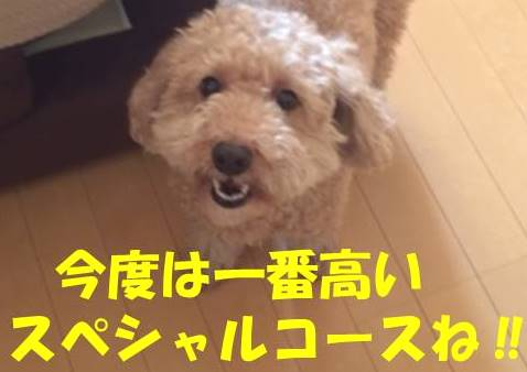 f:id:nanachan59:20180504211939j:plain