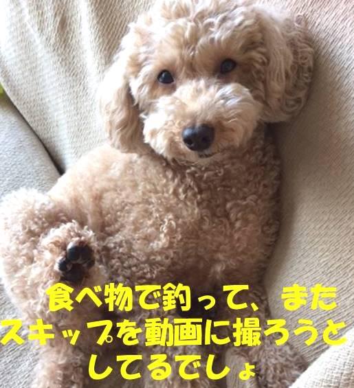 f:id:nanachan59:20180507164738j:plain