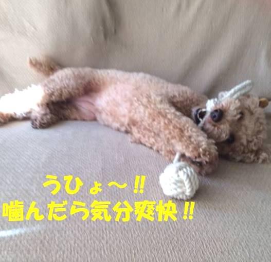 f:id:nanachan59:20180509173537j:plain