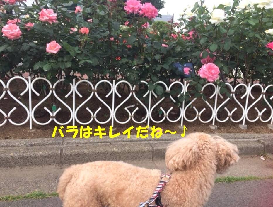 f:id:nanachan59:20180512174014j:plain