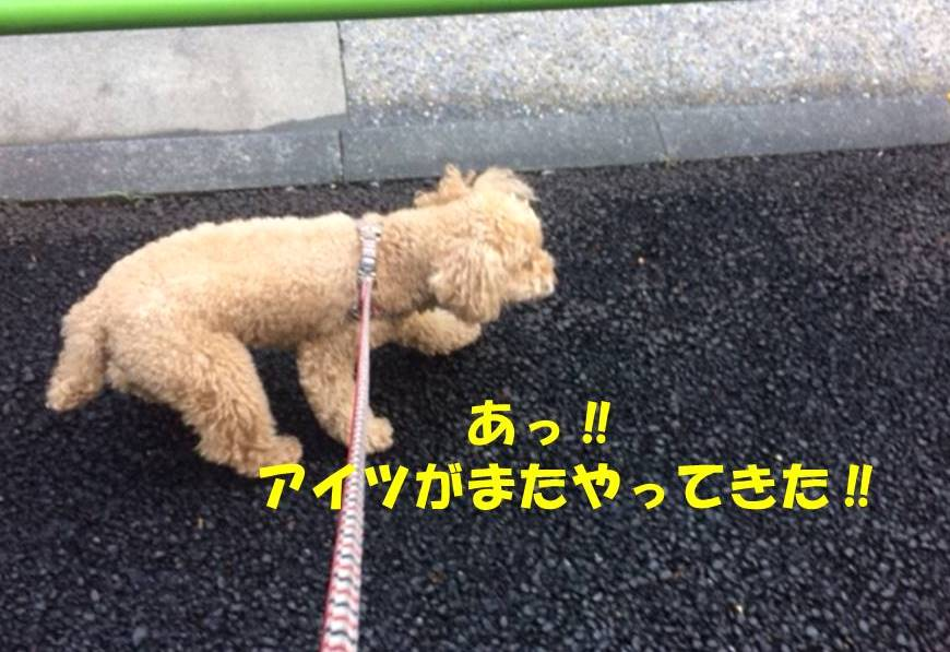f:id:nanachan59:20180512174547j:plain
