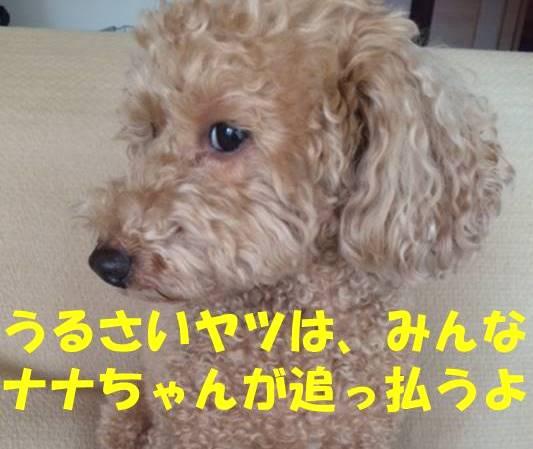 f:id:nanachan59:20180512233409j:plain