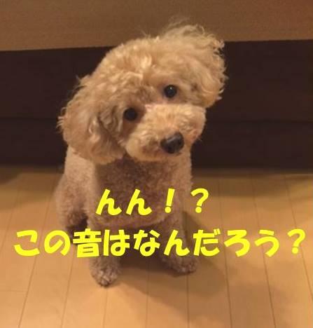 f:id:nanachan59:20180515181239j:plain