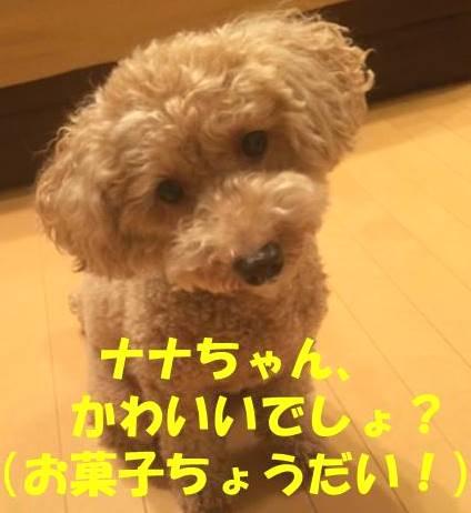 f:id:nanachan59:20180515182018j:plain