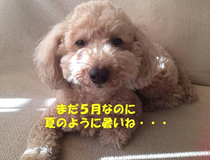 f:id:nanachan59:20180521173227j:plain