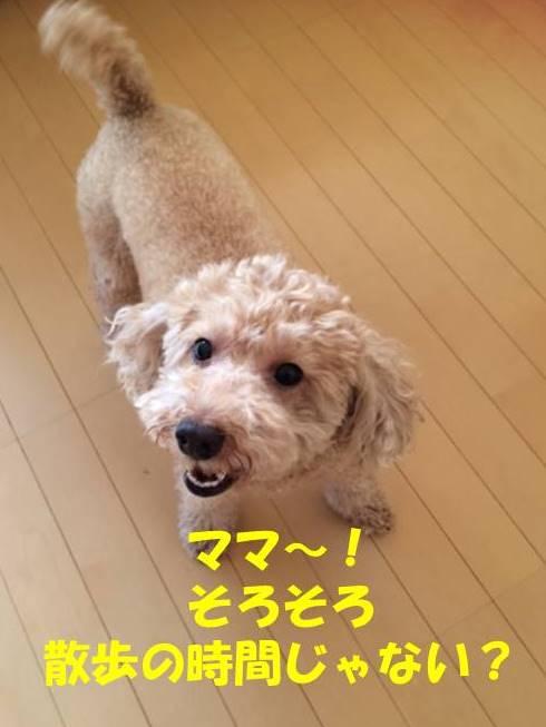 f:id:nanachan59:20180525174848j:plain