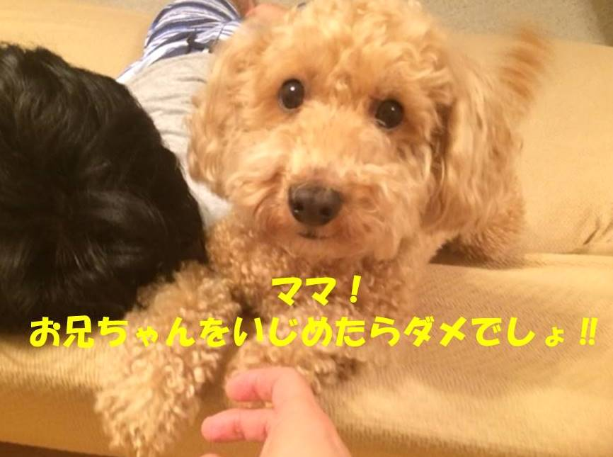 f:id:nanachan59:20180527175913j:plain