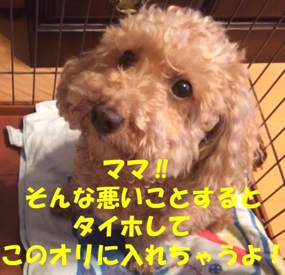 f:id:nanachan59:20180527222937j:plain