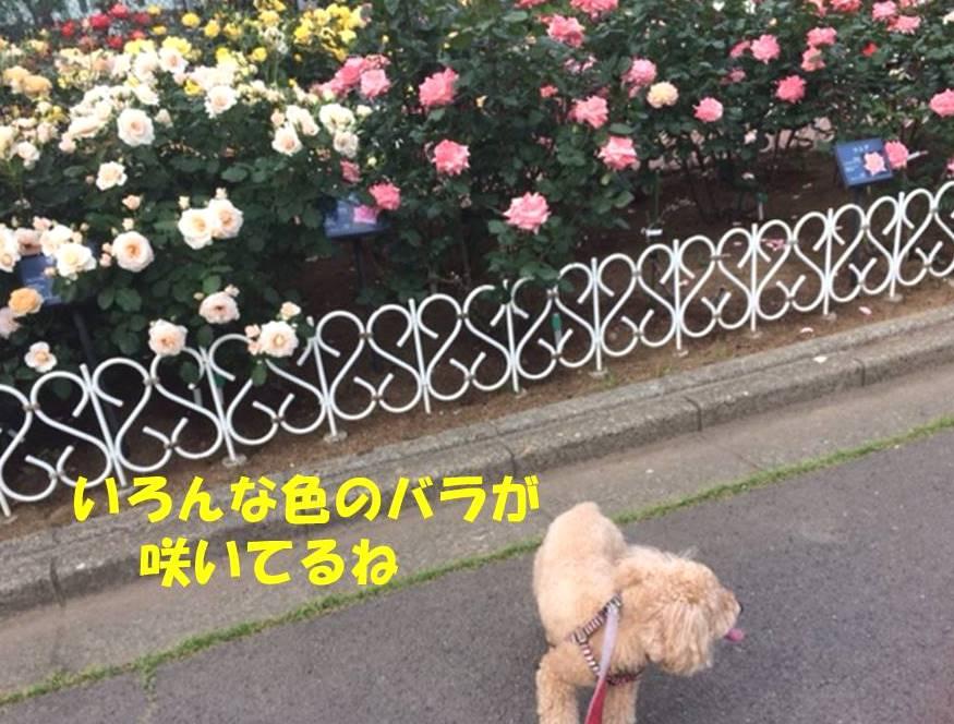 f:id:nanachan59:20180529181253j:plain