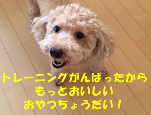f:id:nanachan59:20180601220417j:plain