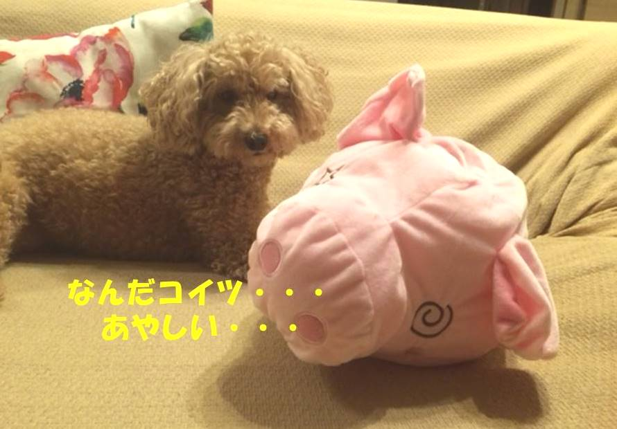 f:id:nanachan59:20180604163551j:plain