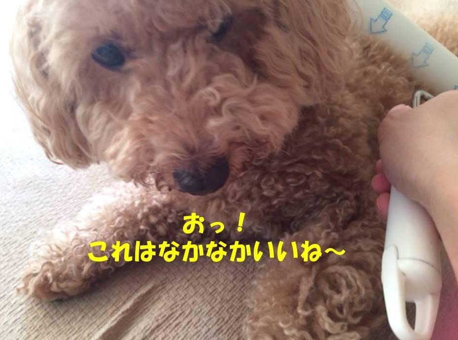 f:id:nanachan59:20180607175942j:plain