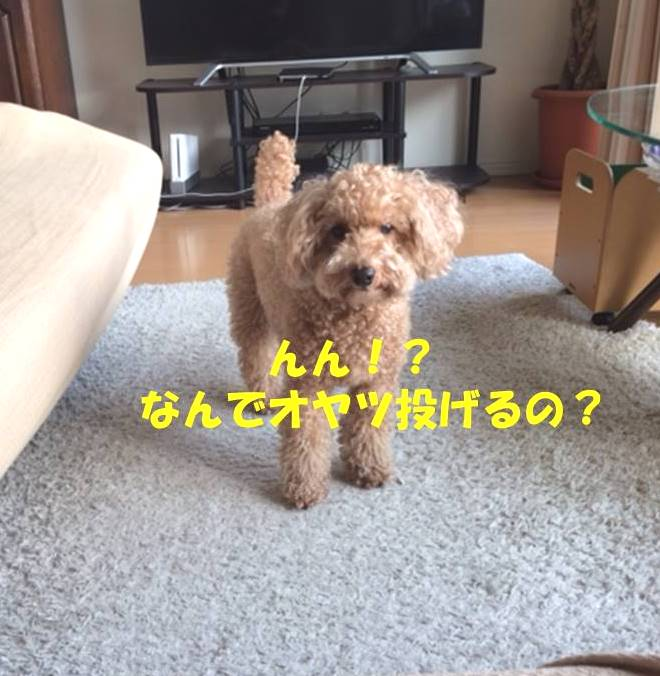 f:id:nanachan59:20180611210200j:plain